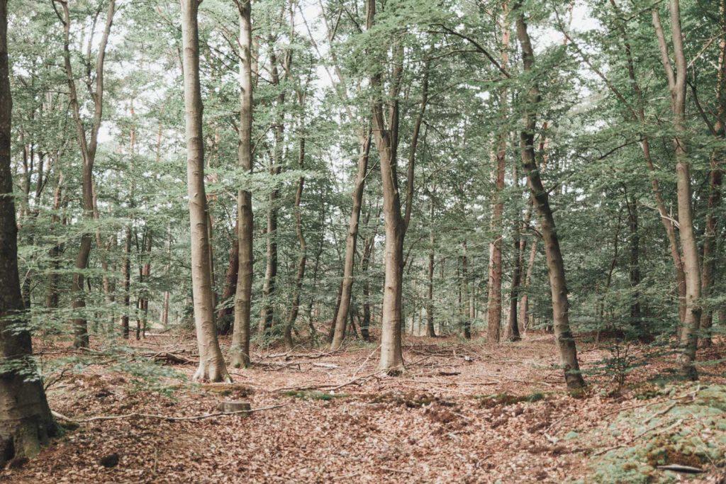 Zandenbos | Nunspeet | Veluwe