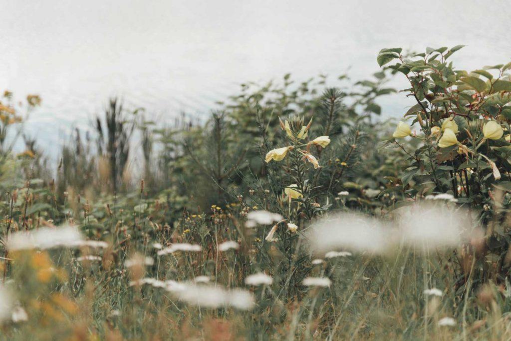 Zandenbos | Zandenplas | Veluwe | Nunspeet