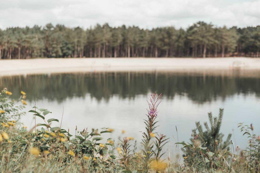 Zandenplas | Nunspeet | Veluwe